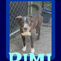 Adopt A Pet :: RIMI - Sebec, ME