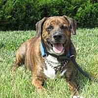 Adopt A Pet :: A071959 Mojo - Overland Park, KS