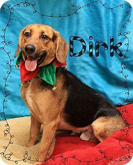Hound (Unknown Type)/Shepherd (Unknown Type) Mix Dog for adoption in Ogden, Utah - Dirk