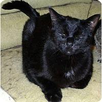Adopt A Pet :: Sergei - Alexandria, VA