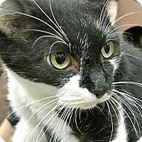 Adopt A Pet :: Blair - white settlment, TX