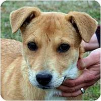 Adopt A Pet :: Cindy - kennebunkport, ME