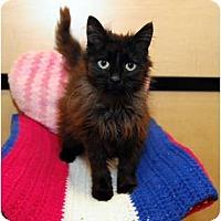 Adopt A Pet :: Coco - Farmingdale, NY