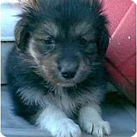 Adopt A Pet :: DAKOTA - dewey, AZ