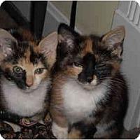 Adopt A Pet :: Olivia & Ophelia - Riverside, RI