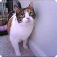 Adopt A Pet :: Mango - Scottsdale, AZ