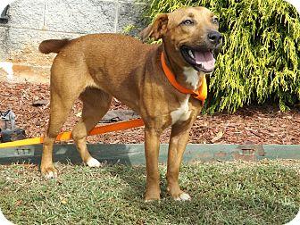 Hound (Unknown Type) Mix Dog for adoption in Thomaston, Georgia - Scarlette