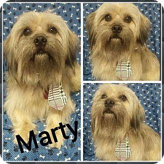 Tibetan Terrier Mix Dog for adoption in Urbana, Ohio - Marty