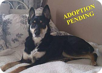 German Shepherd Dog Mix Dog for adoption in Winnipeg, Manitoba - SADIE