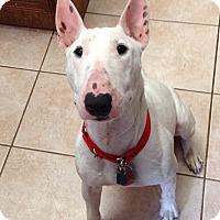 Adopt A Pet :: Royal - Houston, TX