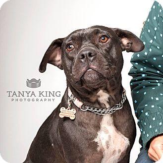 French Bulldog Mix Dog for adoption in Pitt Meadows, British Columbia - Elsa