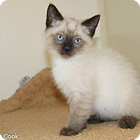 Adopt A Pet :: Malkin - Ann Arbor, MI