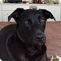 Adopt A Pet :: Rita - Crocker, MO