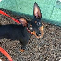 Adopt A Pet :: Poco - Oceanside, CA