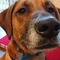 Adopt A Pet :: Dan - in Maine - kennebunkport, ME
