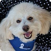 Adopt A Pet :: Toby - La Costa, CA