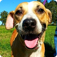 Shepherd (Unknown Type) Mix Dog for adoption in Simsbury, Connecticut - Grace