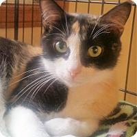 Adopt A Pet :: Sequoia - Medina, OH