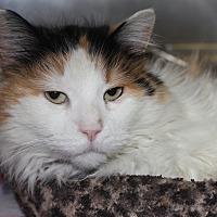 Adopt A Pet :: DAISY - Clayton, NJ