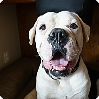 Adopt A Pet :: Bubba - Los Angeles, CA