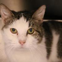 Adopt A Pet :: Angel - Cincinnati, OH
