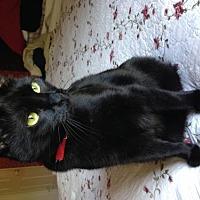 Adopt A Pet :: Treble - Herndon, VA
