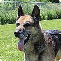 Adopt A Pet :: Titan - Douglas, ON