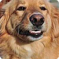Adopt A Pet :: Jaxx - New Canaan, CT