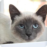 Adopt A Pet :: Bluebell - San Rafael, CA