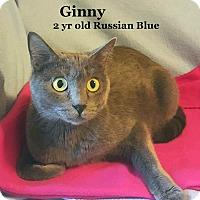 Adopt A Pet :: Ginny - Bentonville, AR