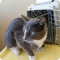 Adopt A Pet :: Smokey - Modesto, CA