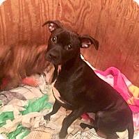 Adopt A Pet :: Tess - Morgantown, WV