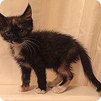 Adopt A Pet :: Tulia - Encinitas, CA