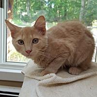 Adopt A Pet :: Madison - Ronkonkoma, NY