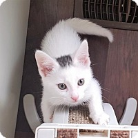 Adopt A Pet :: Smudge - Richmond Hill, ON