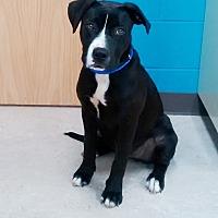 Adopt A Pet :: Mystery - Marietta, GA