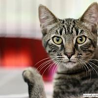 Adopt A Pet :: Bucky - Westchester, CA