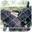 Photo 3 - Labrador Retriever Mix Puppy for adoption in Hammonton, New Jersey - Susie