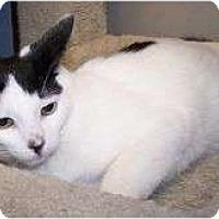 Adopt A Pet :: K-Ron10-Galahad - Colorado Springs, CO