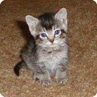 Adopt A Pet :: Timmy - Whitestone, NY