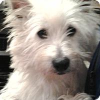 Adopt A Pet :: Rocco-Pending Adoption - Omaha, NE