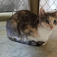Adopt A Pet :: Renee - Geneseo, IL
