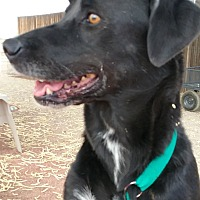 Adopt A Pet :: Toots - Casa Grande, AZ
