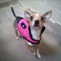 Adopt A Pet :: Tia - Cooperstown, NY
