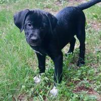 Adopt A Pet :: Charlotte - Von Ormy, TX