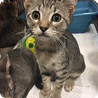 Adopt A Pet :: Meg - Boynton Beach, FL