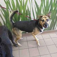 German Shepherd Dog Mix Dog for adoption in Ocala, Florida - LUCKY