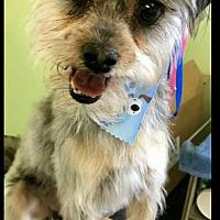 Adopt A Pet :: Logan - Plainfield, IL