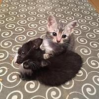 Adopt A Pet :: Jessica - New York, NY