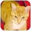 Photo 4 - Domestic Shorthair Cat for adoption in HARRISONVILLE, Missouri - DEWEY